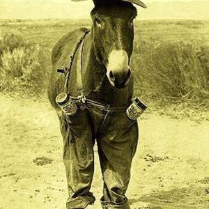 Drunk Mule