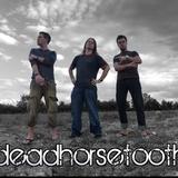 deadhorsetooth
